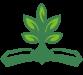 Livre et arbre verts écologique
