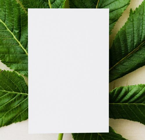 feuille blanche a4 sur plante verte